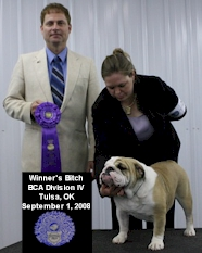 English Bulldog Puppies - Blue Diamond Bulldogs - Champion Bulldog